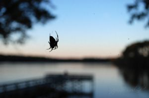 fall_lake_spider.jpg