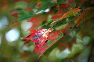 fall_leaves_896_600.jpg